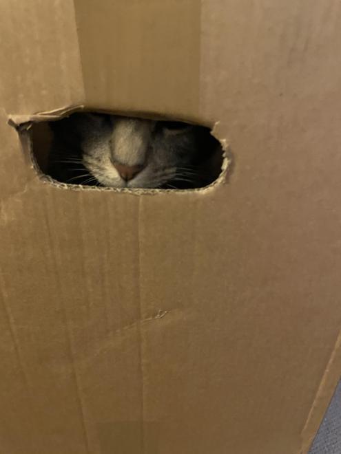 Bosun playing hide and seek in a box!