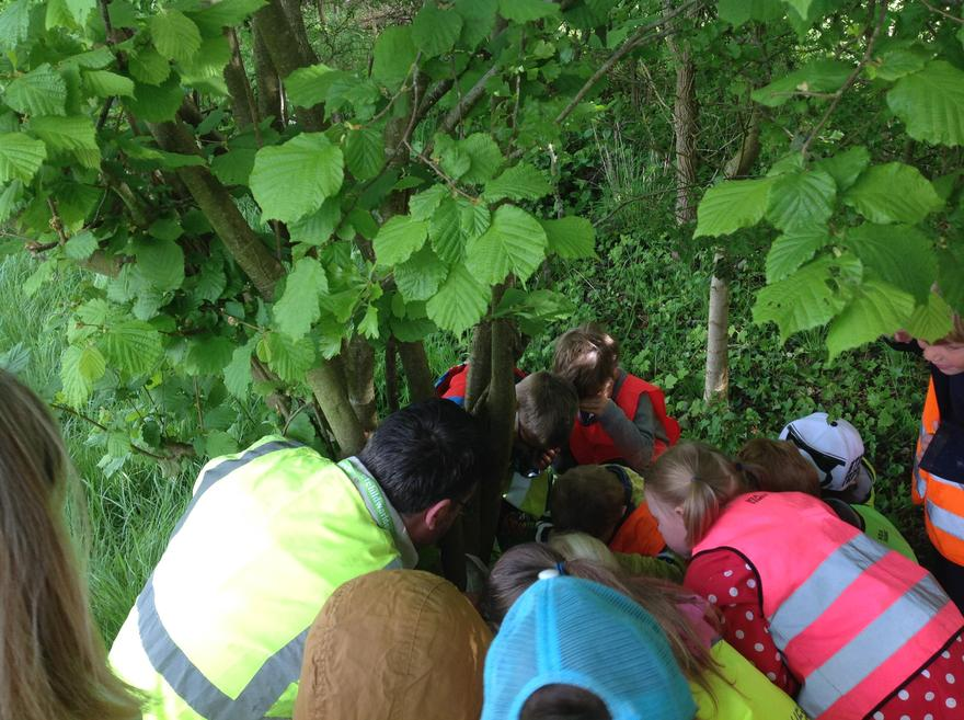 Exploring the woods during forest school