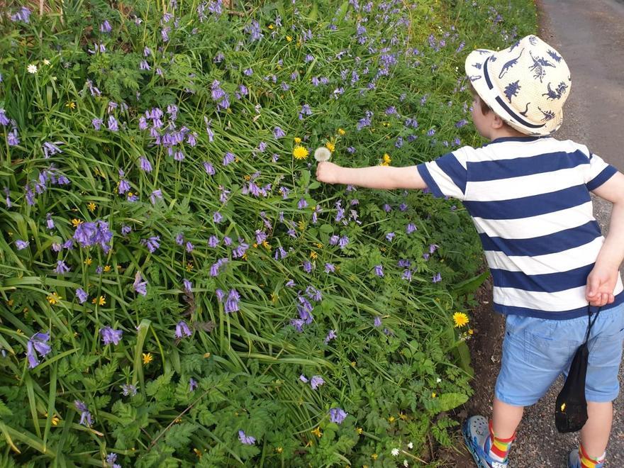 admiring the lovely bluebells