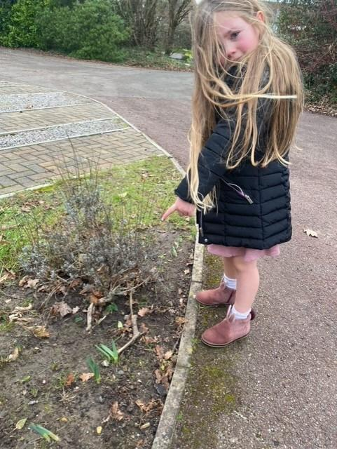 finding shoots in winter