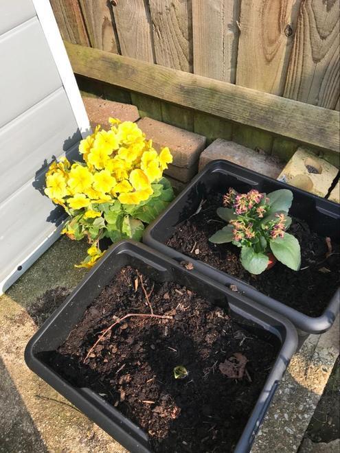 Mrs Soley's gardening