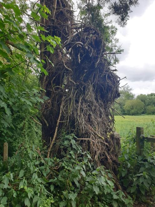 Fletchers strange tree