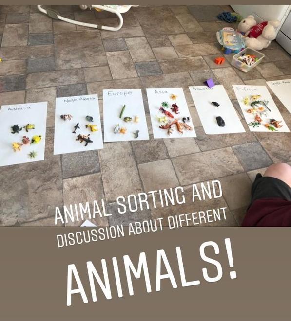 Hugo - sorting animals