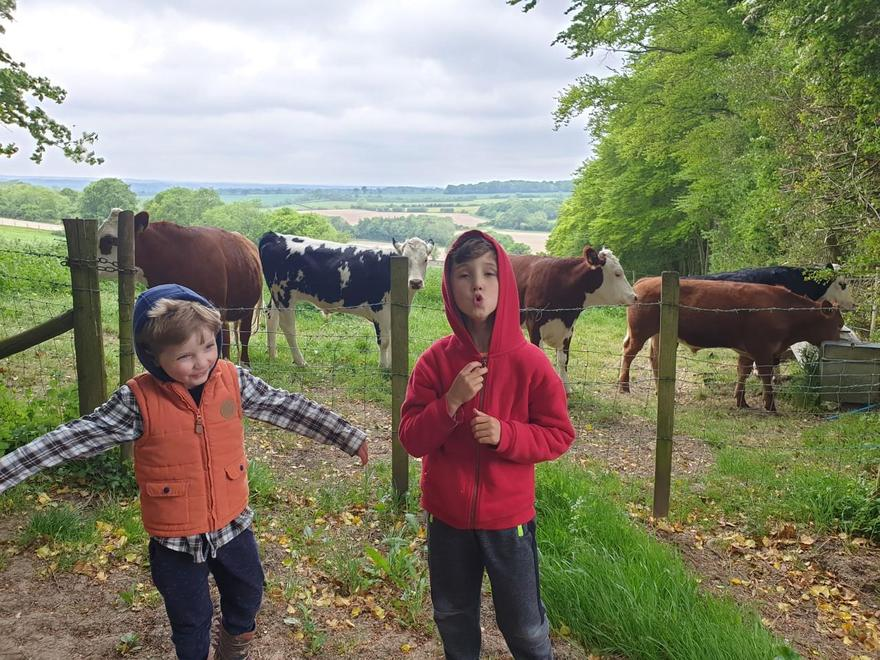 Happy to see the cows again on a walk