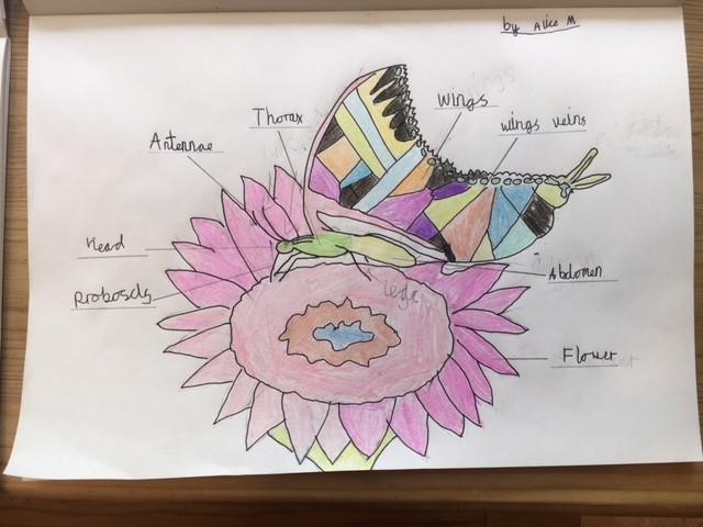 Alice's art