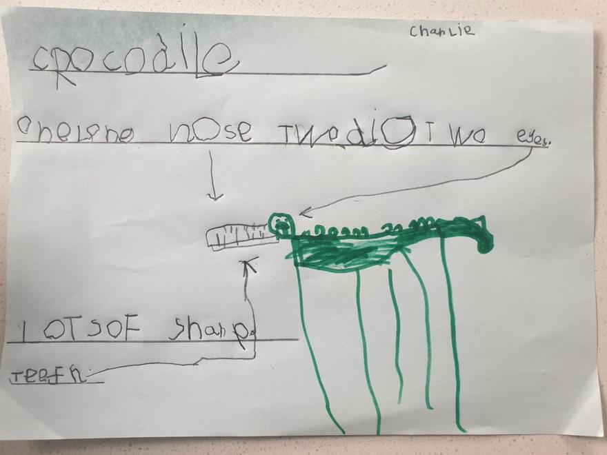 Charlie - Going on a crocodile hunt