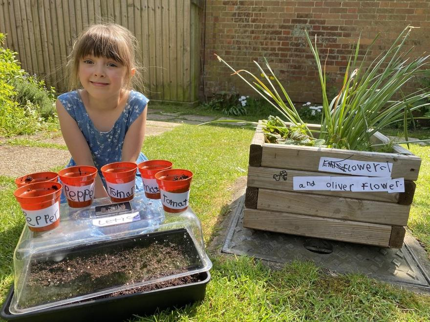 Growing seeds at home