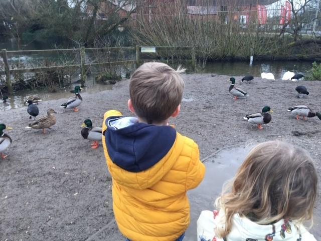 Having fun watching the ducks