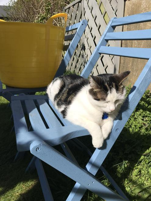 Of course I need my own garden chair!
