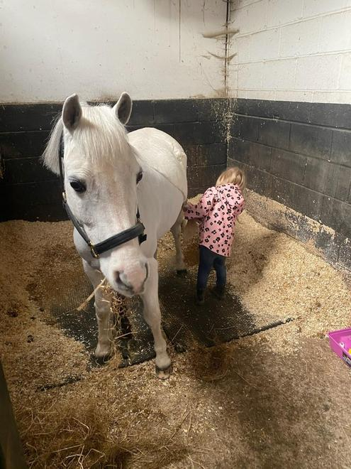 Learning how to care for a pony