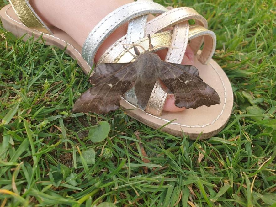 A moth landed on Emi's foot!