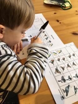 Recognising different birds