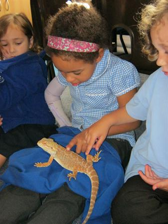 Meeting the bearded dragons.