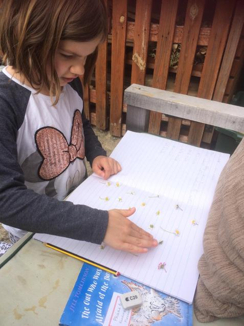 Lily has used daisies in her maths!
