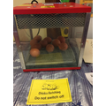 The first photo of the eggs!