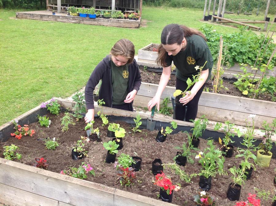 Planting our pollinators.