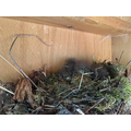 Robins Nesting in our Outside Play Area
