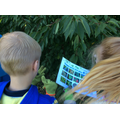 Plant safari - Identifying trees and plants