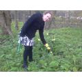 We found daffodils