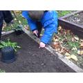 I am planting a bulb