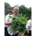 Adam pulled up a huge bunch of weeds!