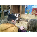 There were pygmy goats!