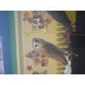 A beautiful barn owl who was very shy