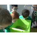 Our tadpoles are very energetic this week!