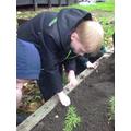 We enjoyed planting the plants