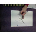 Using the vocabulary of plant structure