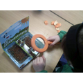 Looking closely at our 'cress garden'
