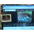 We learned about British birds