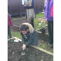 We used the trowels