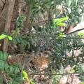 Mini beast hunt 16.5.18