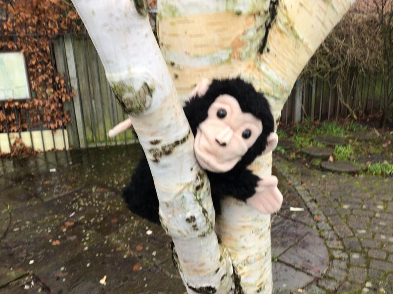 Monkey is climbing a tree