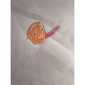 A snail - Fayha
