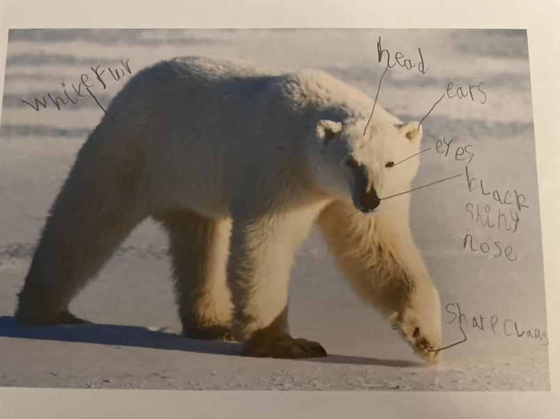Toby labelled the polar bear