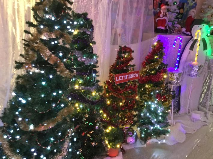 Plenty of Christmas Trees in our Grotto.