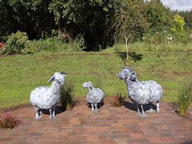 Sheep sculptures.