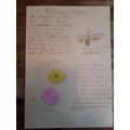 Jimmy has been researching pollinating moths ...