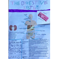 Katie's digestive system poster