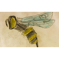 Zakariya's beautiful bee illustration!