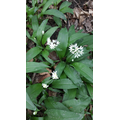 #9 Identify a wildflower!