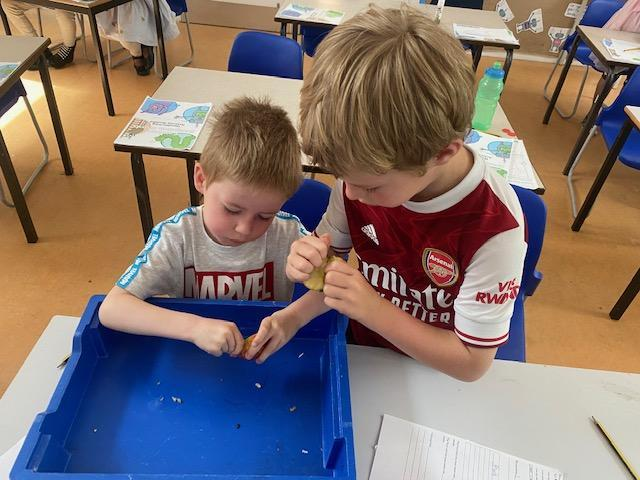 Albert and Harry investigating seeds.