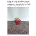 Potato Character Story Charlotte Year 6