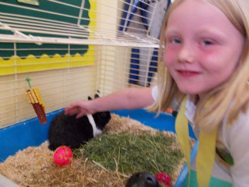 Caring for our rabbit Fluffy