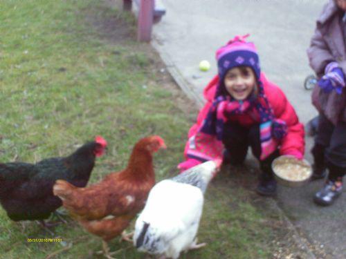 Feeding our hens.