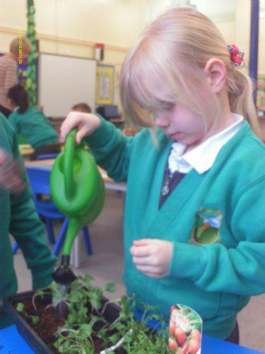Taking care of our vegetables.