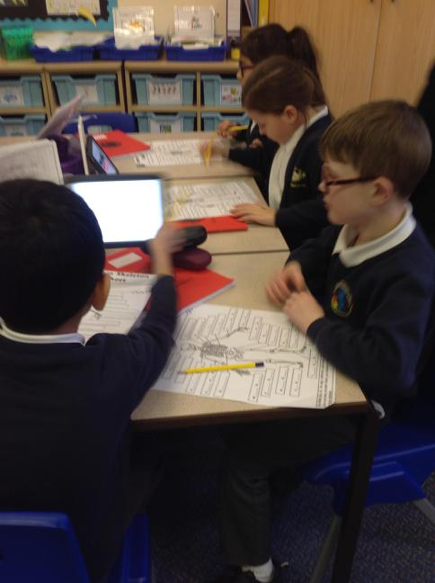 working together to find the bone names