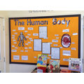 Y3 -Science - The Human body